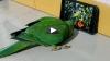 पालतू तोते को लग गई मोबाइल की लत, उसकी रट से घरवालों को परेशान होकर दिखाना पड़ता है वीडियो, देखिए