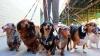 कमलनाथ सरकार में 46 'कुत्तों' के तबादले, BJP बोली-'इनको तो बख्श दो सरकार'