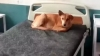 मिर्जापुर के बाद मुरादाबाद में सरकारी अस्पताल के बेड पर बैठा मिला कुत्ता,AAP MLA के 'बयान' पर मचा था बवाल