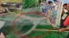 अजगर से हैवानियत: ग्रामीणों ने जाल में फंसाकर लाठी से पीट-पीटकर उतारा मौत के घाट, लोग बनाते रहे VIDEO