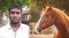 घोड़ी के पास आया घोड़ा तो उसके मालिक ने मार डाला