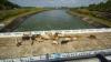 रिपोर्ट: देश में सबसे ज्यादा गुजरात के 75% पुल खराब