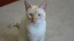 Video: अपनी जानकर खेलकर बिल्ली ने बचाई बच्चे की जान, सोशल मीडिया पर बनी 'हीरो'