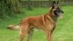 आर्मी के कुत्तों ने ली 31 साल के जवान की जान, खाना खिलाने गए अपने मालिक पर किया हमला
