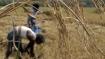 महाराष्ट्र में किसान ने की आत्महत्या, इस वजह से 6 दिनों तक पेड़ पर लटका रहा शव