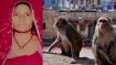 पति को किडनी दान करने वाली महिला की मौत, बंदरों ने धक्का मारकर छत से नीचे गिराया