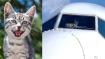 फ्लाइट के उड़ान भरते ही बिल्ली ने किया कुछ ऐसा, यात्रियों की जान बचाने के लिए करवानी पड़ी इमरजेंसी लैंडिंग