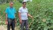 सरकार की किसानों से अपील- वर्टिकल फार्मिंग अपनाएं, पानी बचाएं, देंगे अनुदान