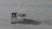 पटना में गंगा नदी से बरामद हुए शव, जिलाधिकारी ने कहा- कर रहे हैं मामले की जांच