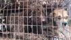 चीन का क्रूर चेहरा देखिए, डॉग मीट फेस्टिवल में कुत्तों से क्रूरता की हर सीमा कर डाली पार