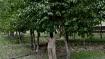 तीन दोस्तों ने बंजर धरती समेत गांवभर में लगाए 3,000 पेड़, बारिश से छाई हरियाली, चमकी सूरत