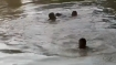 मध्य प्रदेश : गणेश प्रतिमा विसर्जन के दौरान भिंड में हादसा, तालाब में डूबने से चार बच्चों की मौत