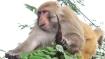 वकील के हाथ से एक लाख रुपए से भरा बैग छीनकर भाग गए बंदर, जानिए क्या हुआ फिर?