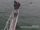 VIDEO: अचानक निकली शार्क और व्यक्ति के पैर पर किया हमला