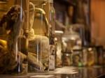 अजब-गजब: इस म्यूजियम में हैं दुनिया के 300 जानवरों के लिंग