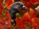 कबूतर के पैर में चिप और संदेश देख गुजरात पुलिस-एटीएस अलर्ट