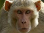 Video- देखिये कैसे एक बंदर ज्वेलरी शॉप में 20 मिनट बैठने के बाद ले उड़ा 10 हजार रुपए