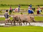क्या है ग्रामीण उद्यमिता जागरूकता विकास योजना?