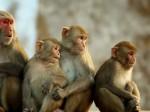 VIDEO: बंदरों की कूद-फांद के चलते लगी आग, बुलानी पड़ी फायर ब्रिगेड