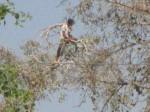 मिर्जापुर: पिटाई करने वालों की करो पिटाई, जेल के पीपल पर चढ़ कैदी ने किया हलकान