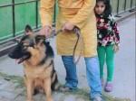 यूपी: आजम के करीबी अफसर का कुत्ता हुआ गुम, पुलिस ने 48 घंटे में खोज निकाला
