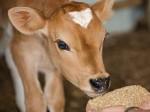 गाय चुराने के आरोपी को भीड़ ने पीट-पीट कर मार डाला