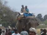 13  गांवों को परेशान कर रहे टाइगर को खोजने के लिए मिर्जापुर में आया हाथी