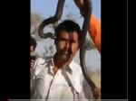 राजस्थान: कोबरा के साथ कर रहा था स्टंट, पता भी नहीं चला और चली गई जान, देखें वीडियो