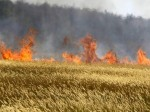 किसानों की जल जाए फसल तो अपनाएं ये तरीका, मिलेगी तुरंत आर्थिक मदद