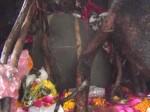 मुरादाबाद: पेड़ की जड़ से निकले भोले बाबा, तीन दिन में हुए तीन गुना, एक महिला का ख्वाब हुआ हकीकत!