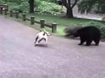 कुत्ते ने दिखाई ऐसी बहादुरी कि खुंखार भालू भागा दुम दबाकर, देखिए वीडियो