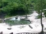 मां के साथ टहलता हाथी का बच्चा कुछ सेकेंड में जा गिरा गहरे पूल में, देखिए फिर क्या हुआ?