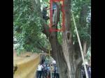 हत्या या खुदकुशी- कोर्ट कैंपस में पेड़ से लटकती मिली 'अनजानी' लाश