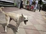 लखनऊ में सरकारी अस्पताल में महिला के शव को कुत्ते नोंच-नोंचकर खा गए