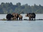 पानी-पानी हुआ काजीरंगा नेशनल पार्क, 140 जानवरों की मौत