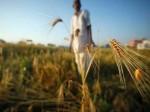 महाराष्ट्र के मराठवाड़ा क्षेत्र में अब तक 580 किसानों ने की आत्महत्या