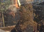 एक घंटे तक एक लाख मधुमक्खियों की बीच लगाई बैठकी, जानिए फिर क्या हुआ उसका?
