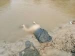 नदी किनारे मिला महिला का शव, रेप के बाद हत्या की आशंका
