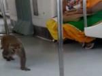 VIDEO: दिल्ली मेट्रो के अंदर घुसा एक बंदर, नियम-कानून का किया पालन