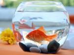 Feng Shui Tips: घर में रखिए 'एंक्वेरियम', होंगे फायदे ही फायदे