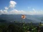 हिमाचल प्रदेश चुनाव 2017: सीट नंबर 54 कसौली (आरक्षित अनूसूचित जाति) विधानसभा क्षेत्र के बारे में जानिये