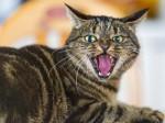 82 साल की महिला की हुई हत्या की कोशिश, पुलिस ने बिल्ली पर लगाया आरोप, जांच शुरू