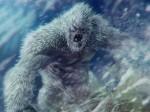 कोई राक्षस नहीं बल्कि सिर्फ एक भालू है Yeti, स्टडी में वैज्ञानिकों ने किया दावा