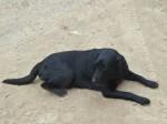 इस कुत्ते को ढूंढने वाले को मिलेगा आईफोन और 10 हजार का नकद इनाम
