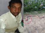 OMG: सांप ने काटा तो गुस्से में किसान ने चबा डाला उसका फन, किसान पूरी तरह फिट