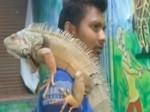Video: इंदौर का जूस वाला मुंबई से खरीद लाया यह अजीबोगरीब छिपकली, देखने के लिए लगी लोगों की भीड़