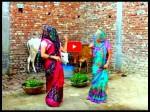 VIDEO: पल्लू ढककर गाय को चारा देने गई दो बहुएं, वीडियो ने मचाया तहलका