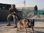 सीआईएसएफ की मदद करेंगे ओसामा बिन लादेन का पता लगाने वाले खास तरह के कुत्ते