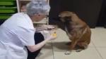 पंजे में चोट लगी तो मदद मांगने फार्मेसी पहुंचा कुत्ता, दवा लगवाकर इस तरह किया शुक्रिया