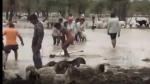 राजस्थान की इस जगह पर रात को अचानक हुई तेज बारिश, 500 भेड़ों की मौत, सैकड़ों तालाब में फंसी